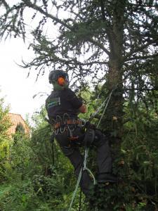 Klimmend afbreken van boom door Freerk van der Burg